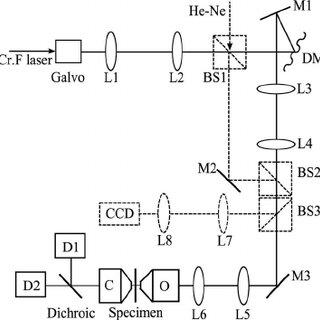 (PDF) Adaptive harmonic generation microscopy of mammalian