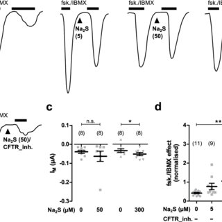 Epithelial ion transport responses to exogenous hydrogen