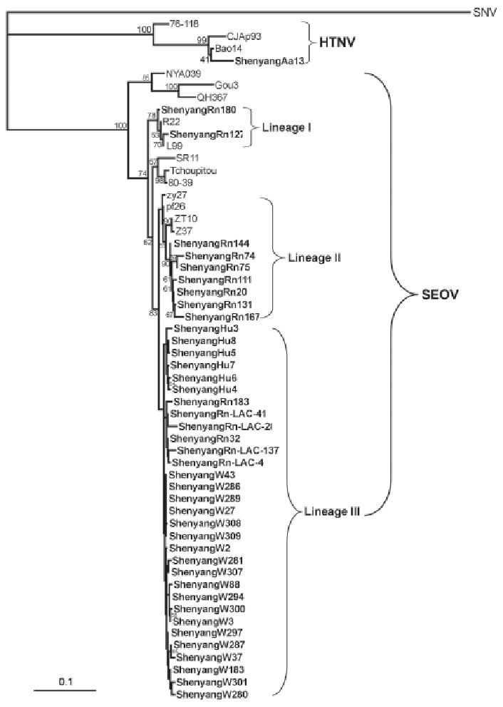Phylogenetic tree of hantaviruses based on partial sequences of ...