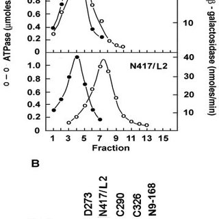 (PDF) ATP22, a Nuclear Gene Required for Expression of the