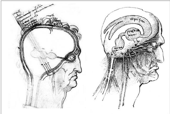 Concept of brain functions and cross-section of the human