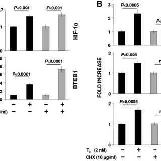 Induction of HIF-1 ␣ , GLUT1, and PFKP by TH Activation of