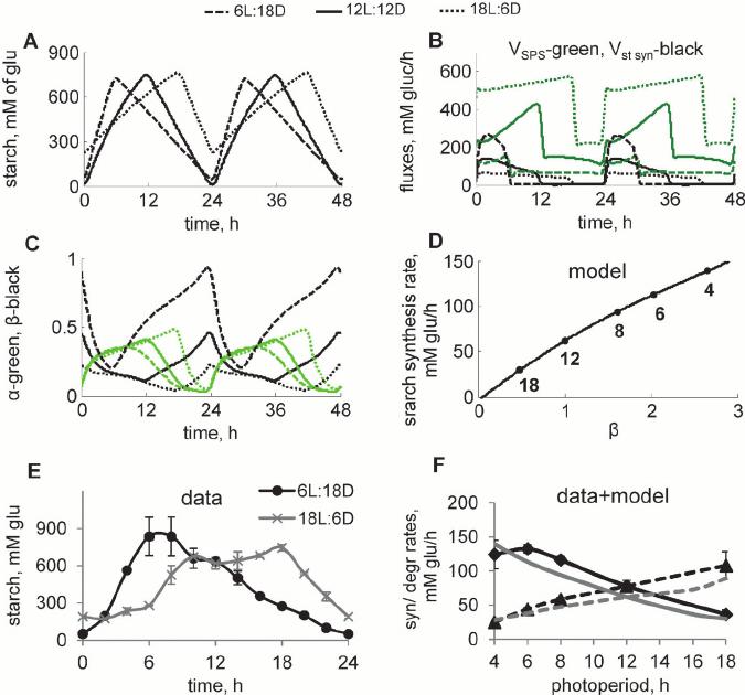 Diurnal regulation of starch kinetics under different