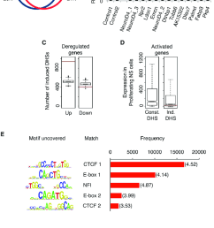 characterization of changes in chromatin accessibility during download scientific diagram [ 850 x 1303 Pixel ]