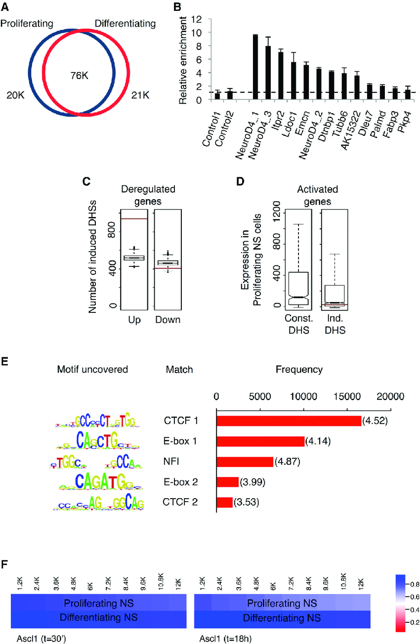 medium resolution of characterization of changes in chromatin accessibility during download scientific diagram