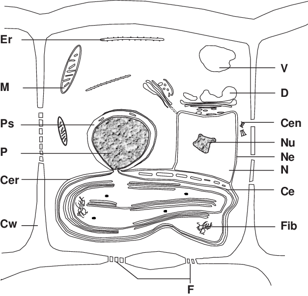 Schematic diagram of a brown algal cell. (Ce) Chloroplast