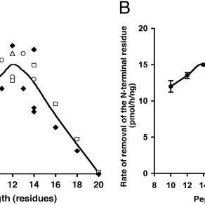(PDF) The ER aminopeptidase, ERAP1, trims precursors to