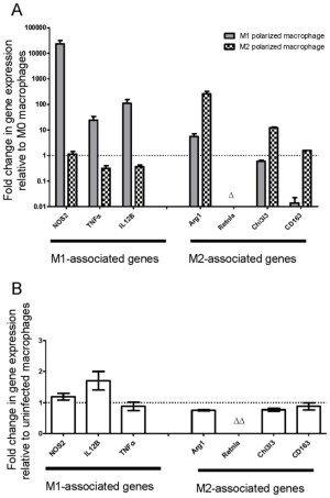Gene expression profiles determined by RTPCR of BMDM (A