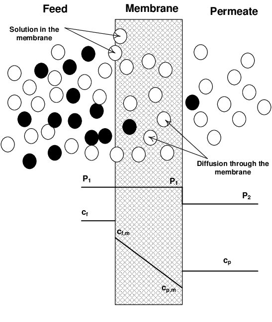 Schematic of the solution-diffusion model in a dense