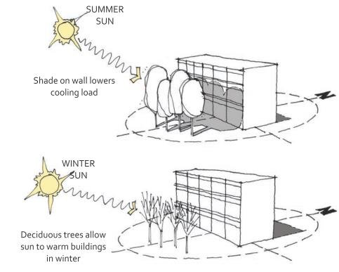Landscape strategies for passive solar heating and day