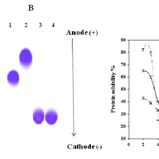 SDS-PAGE, Urea-PAGE and pH solubility curves of Anabaena