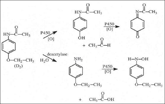 Partial scheme of metabolism of phenacetin[25]. Partial