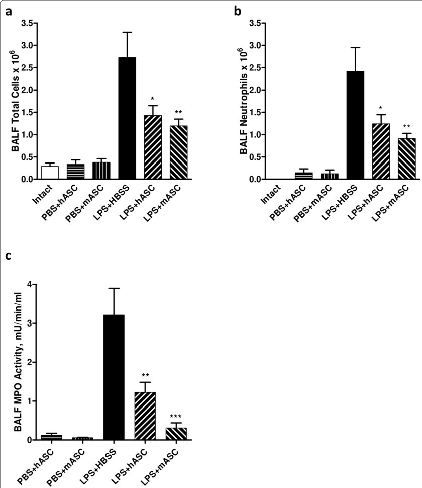 hight resolution of characterization of human and mouse asc effects on inflammatory cell infiltration in the lung after lps injury administration of hascs or mascs
