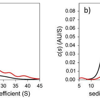 Aggregation of AuGSH-1.4 and AuGSH-2.5 in cell culture