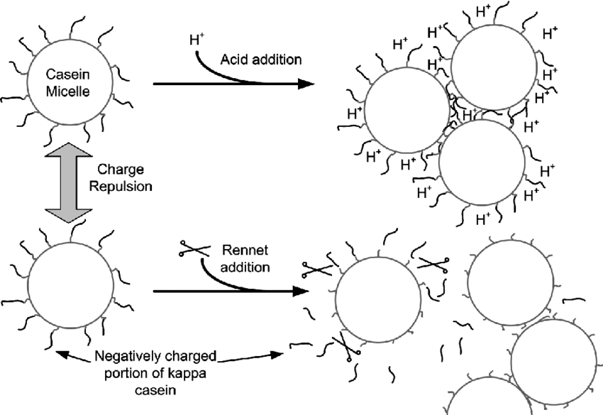 Schematic of methods for promoting casein micelle