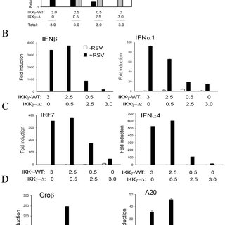 Defective IRF3 activation in cells expressing high
