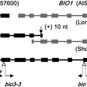 (PDF) A Bifunctional Locus (BIO3BIO1) Required for Biotin
