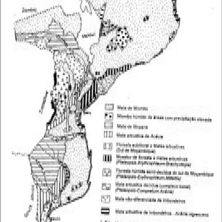 (PDF) MANUAL DE SILVICULTURA TROPICAL MANUAL DE