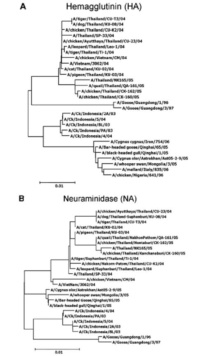 hight resolution of phylogenetic analysis of the hemagglutinin a and neuraminidase b gene sequences of