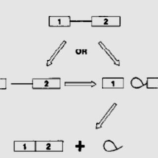 1. Typical course of HIV-1 infection. An HIV-1 individual