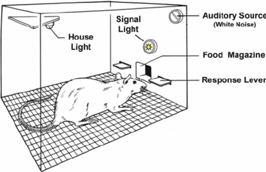 Diagram of the signal detection task (SDT). In the SDT