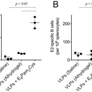 CD11c+ MHC Class II+ splenocyte-derived cultured D1