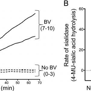 Removal of ␣ 2– 6-linked sialic acid on secretory