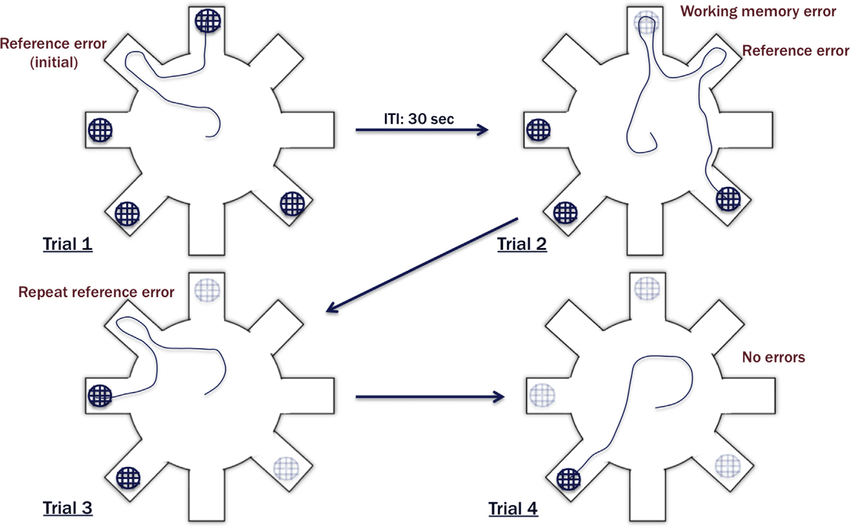 A schematic of the 4/8 radial arm maze and the