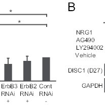 (PDF) Disrupted-in-Schizophrenia-1 expression is regulated