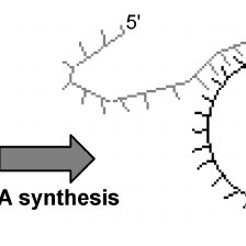 Polymerase chain reaction (PCR). This process includes 30
