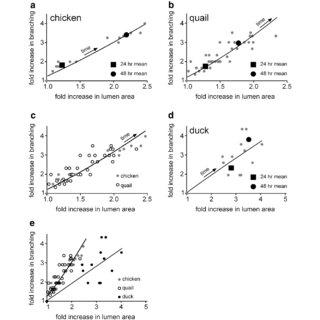 (PDF) Morphogenesis and morphometric scaling of lung