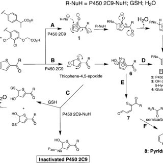 Substrate protection against P450 2C9 inactivation by