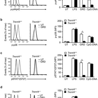 TREML4 positively regulates TLR7 signaling. (a) Expression