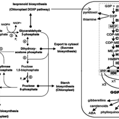 Calvin Benson Cycle Diagram Push Button Start Wiring Calvin-benson-bassham And Its Link To Mep Pathway: Rubisco ( 1 ),... | Download Scientific ...
