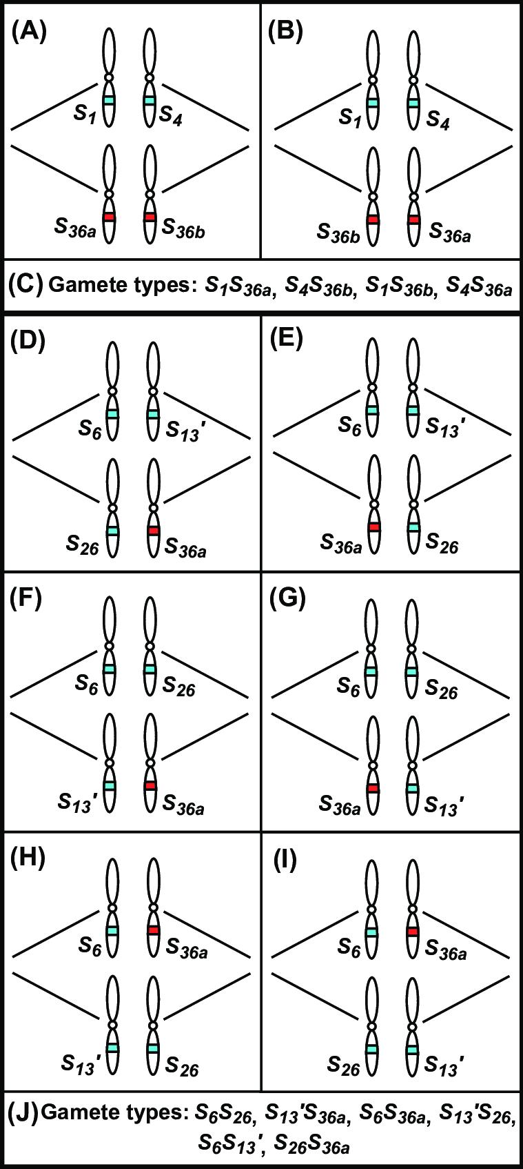 medium resolution of lg shs36 d wiring diagram detailed wiring diagram rh 7 17 3 gospelworkshop kirchzarten de whirlpool electric dryer wiring diagram lg dryer wiring diagram