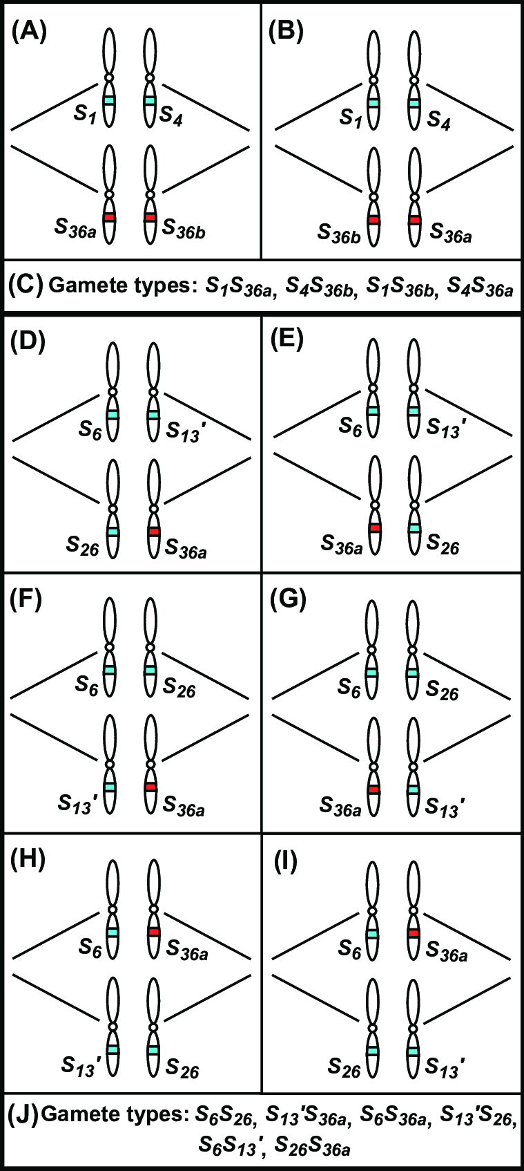 hight resolution of lg shs36 d wiring diagram detailed wiring diagram rh 7 17 3 gospelworkshop kirchzarten de whirlpool electric dryer wiring diagram lg dryer wiring diagram