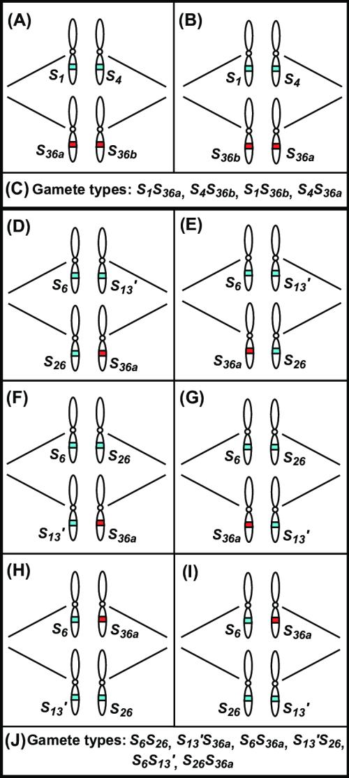 small resolution of lg shs36 d wiring diagram detailed wiring diagram rh 7 17 3 gospelworkshop kirchzarten de whirlpool electric dryer wiring diagram lg dryer wiring diagram