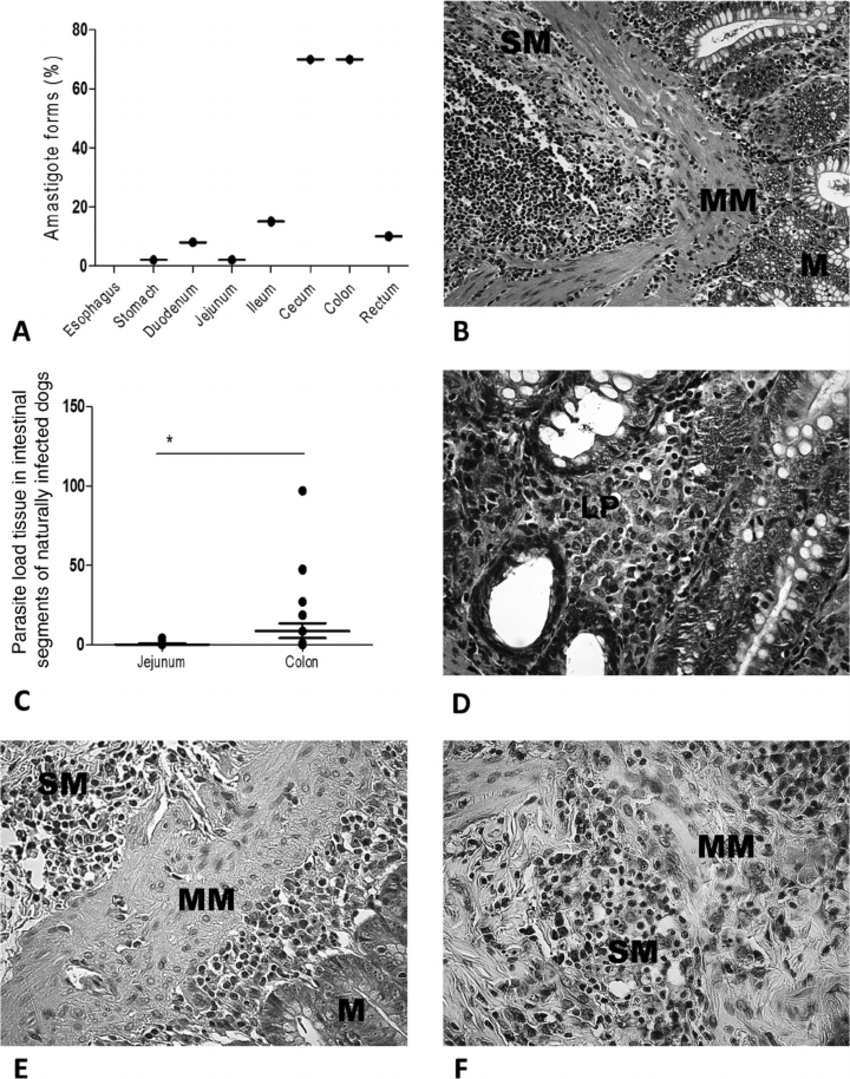 medium resolution of parasite loads in dogs naturally infected with leishmania infantum a frequencies of l