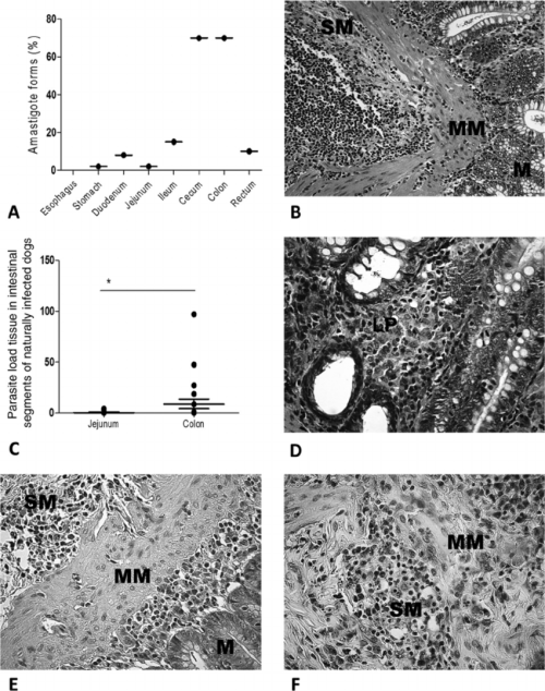small resolution of parasite loads in dogs naturally infected with leishmania infantum a frequencies of l