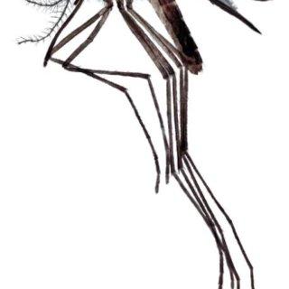 (PDF) Manual de laboratorio de Parasitología. 12. Insectos