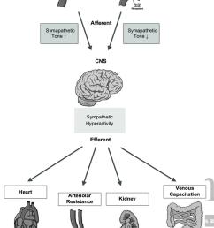 schematic representation of the carotid chemoreceptor and baroreceptor reflexes afferents relay through the brain stem [ 850 x 1279 Pixel ]