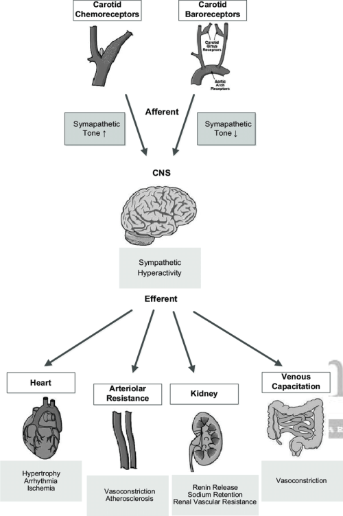 small resolution of schematic representation of the carotid chemoreceptor and baroreceptor reflexes afferents relay through the brain stem