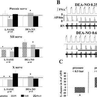 Systemic and cellular effects of NO on respiratory network