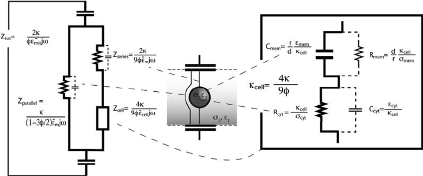 Discrete electric equivalent circuit model of a biological