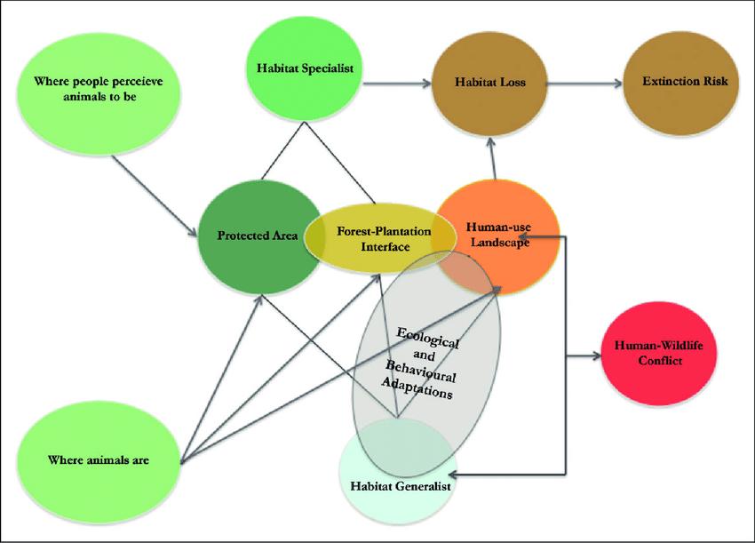 Schematic representation of the interrelationship between natural and...   Download Scientific Diagram