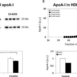 (PDF) Differential Effects of apoE4 and Activation of