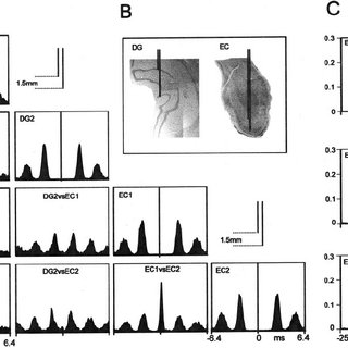 Map of evoked potentials in the CA1 area of the