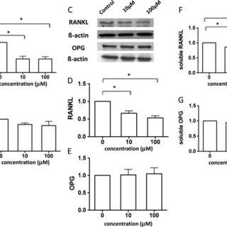 Methotrexate decreases lymphocyte and macrophage