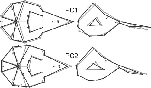 Shape changes associated with PCs 1 and 2 of the principal