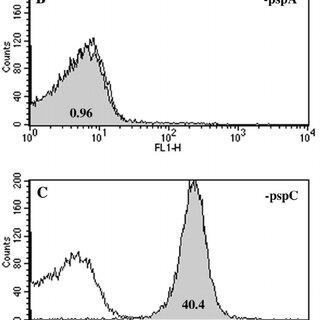 Flow cytometry analysis of lactoferrin binding to isogenic